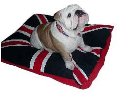 bulldog beds adorable english bulldog dog beds | kuranda dog beds