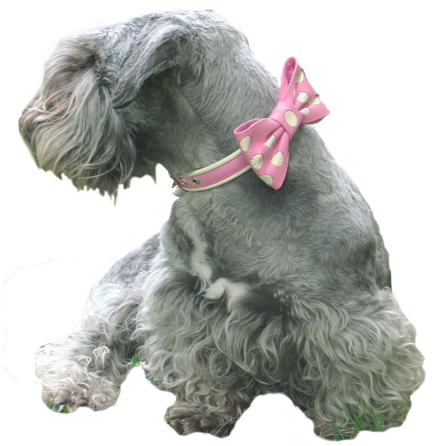 dog bow collar