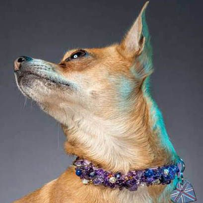 The Amethyst Pearl.  Amethyst dog collar