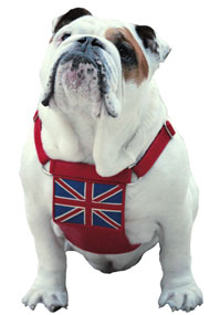 UK Flag Leather dog Harness