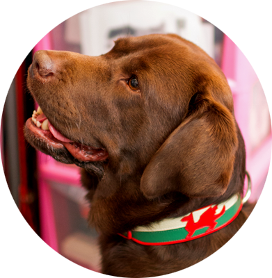 Y Ddraig Goch. Welsh Flag Dog Collar. - Holly & Lil Collars Handmade in Britain, Leather dog collars, leads & Dog harnesses.