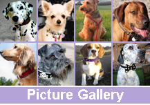 Dog Collars Picture Gallery