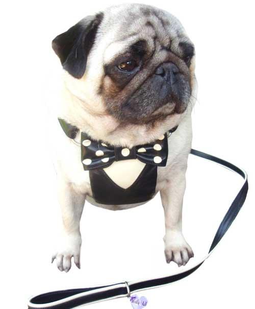 Tuxedo HarnessesSmall & Medium for PugsMade to order 135