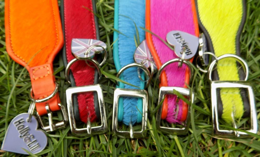 Buckle choices for Hound Collars