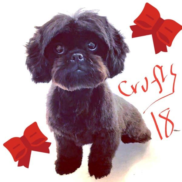 Pre Crufts Groom Thurs 8th March