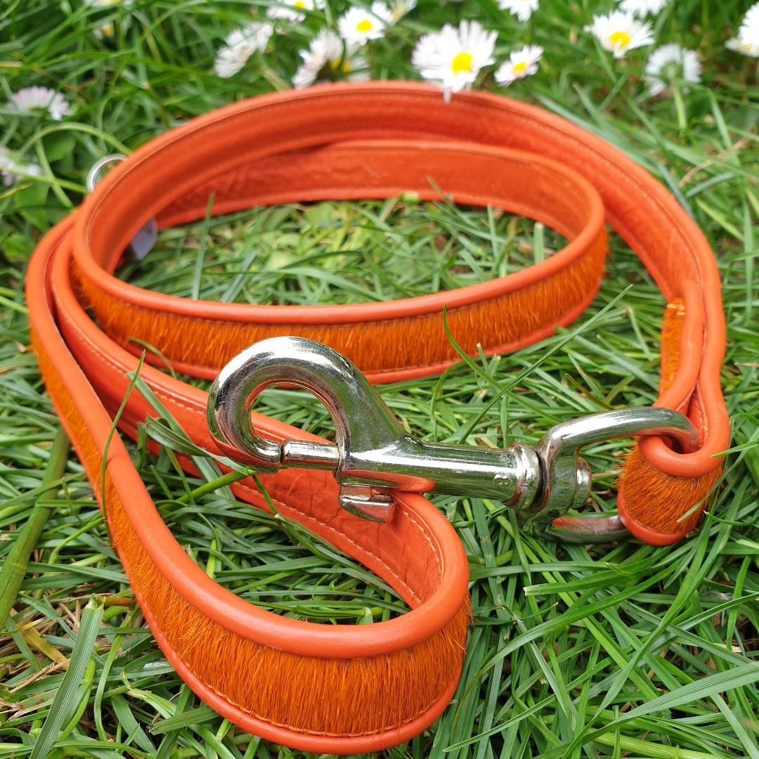 Brightside orange dog lead